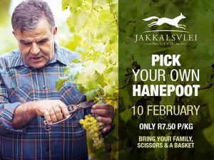 Pick Your Own Hanepoot at Jakkalsvlei