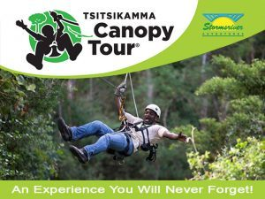 Tsitsikamma Canopy Tour – An Experience You Will Never Forget