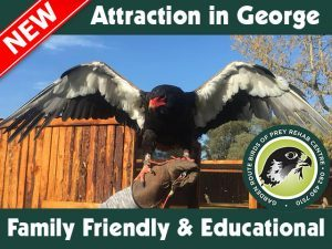 Great-New-Family-Friendly attraction in George-
