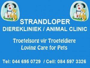 Strandloper