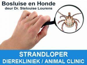 Bosluise en Honde deur Dr. Stelouise Lourens